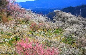 Minabe photo