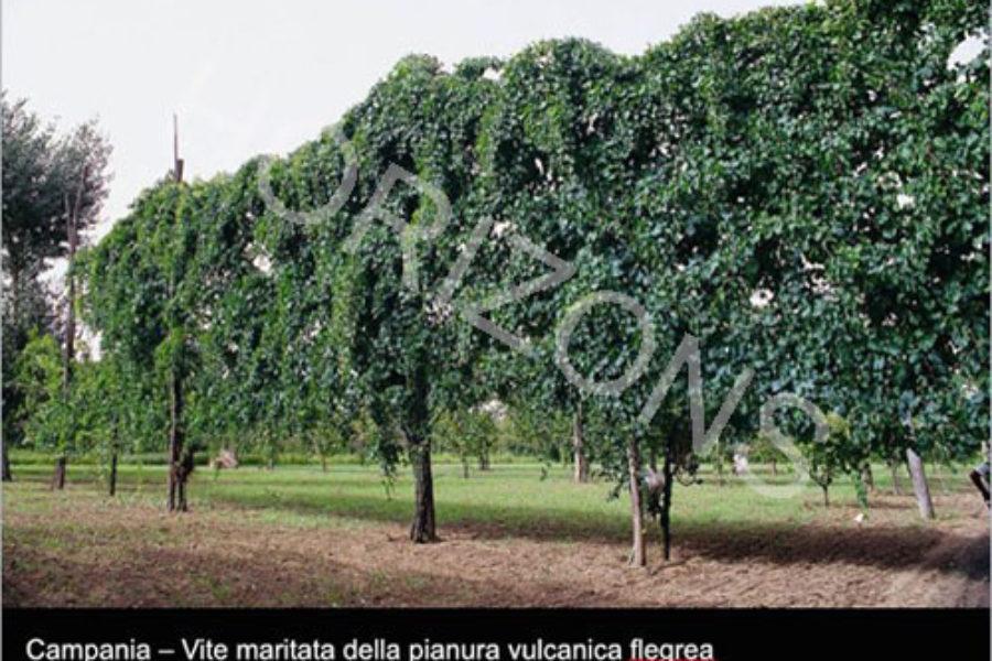 Monitoraggio del paesaggio rurale italiano. Si comincia
