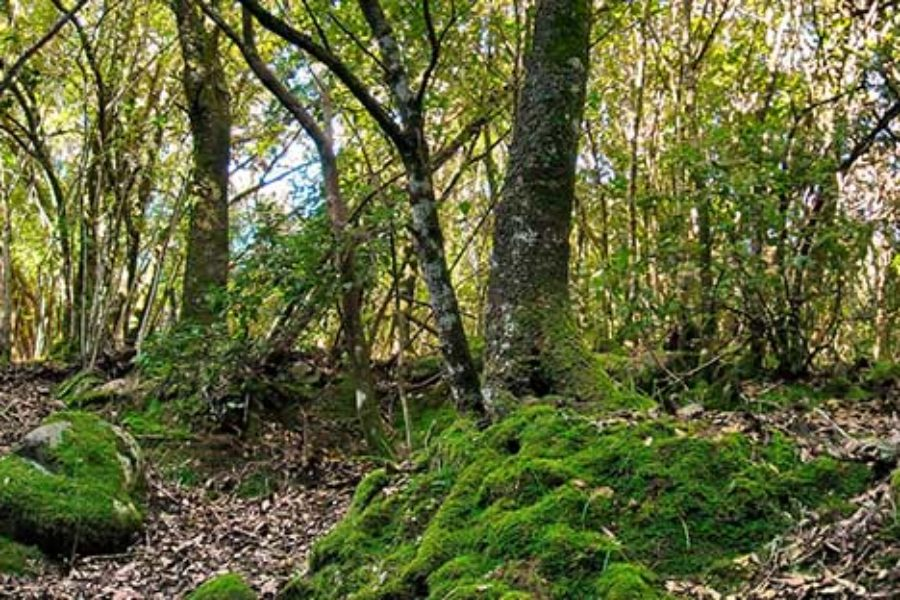 La selva del Sulcis: allarme per il paesaggio forestale sardo?