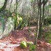 foresta-marganai-321-il-bosco