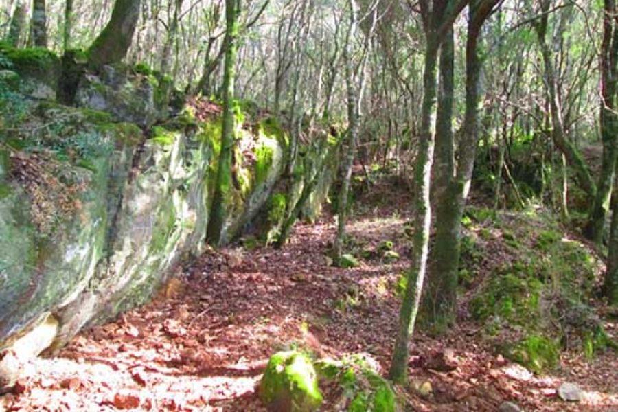 Foresta di Marganai nel Sulcis, gestione del bosco e dissesto idrogeologico