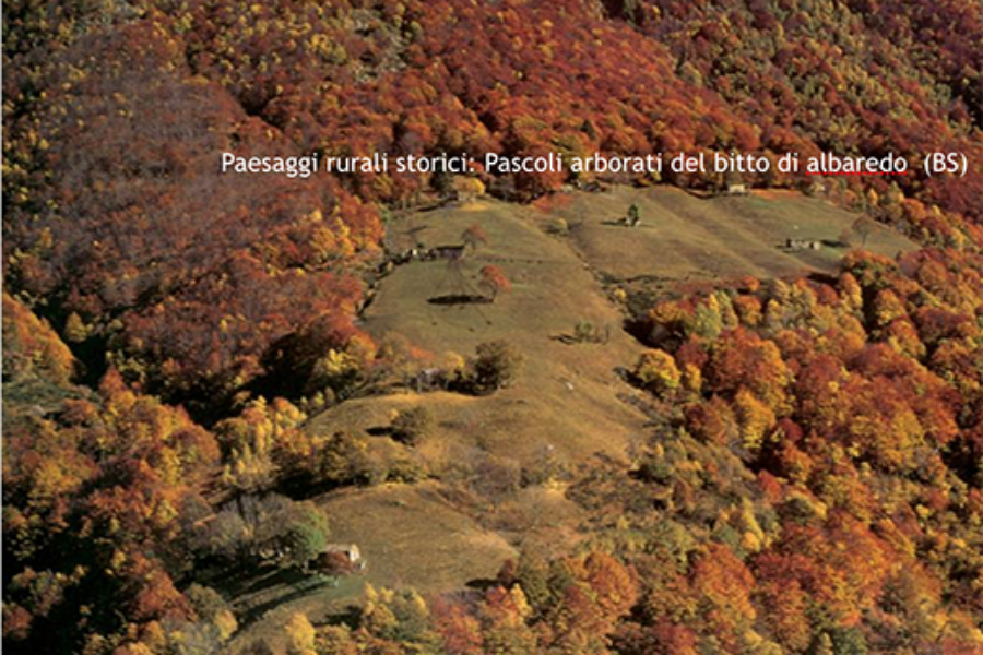 Paesaggi forestali. I pascoli arborati: lezione 2