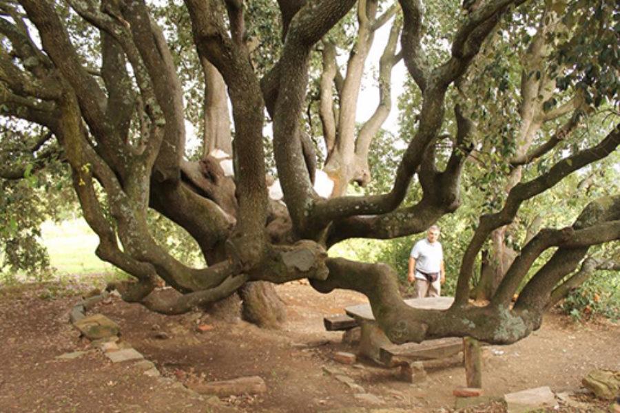 Gli alberi monumentali della Toscana e il Paesaggio rurale storico