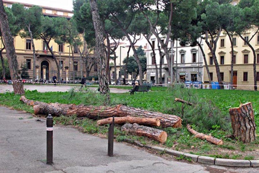Gli alberi in città