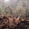 alberi caduti trentino