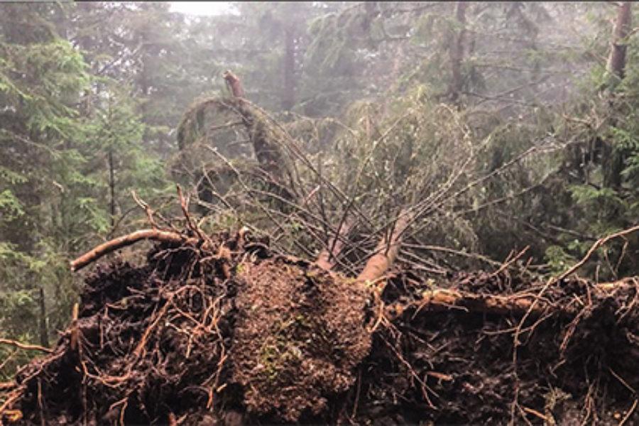 Gli alberi caduti in Veneto e in Trentino Alto Adige