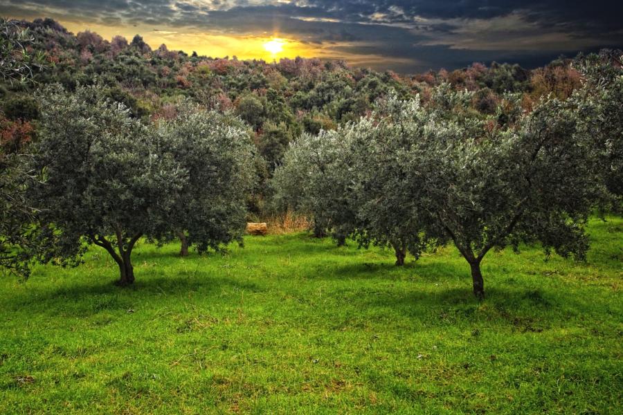 Olivi,  clima e il saluto di Mattarella