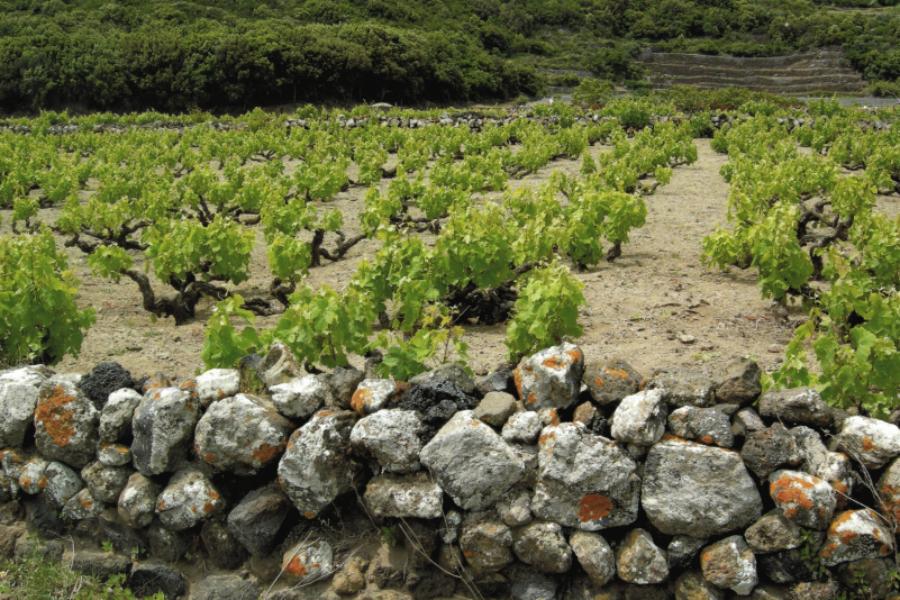 La viticoltura storica è legge